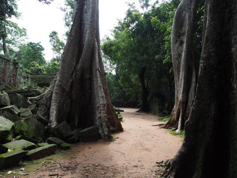 Angkor Wat Day Tour